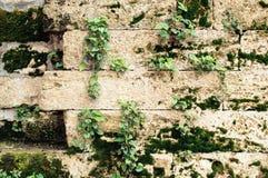 Ściana stary kamień z zielonym mech i kwiatami ornamentu geometryczne tła księgi stary rocznik zdjęcie royalty free