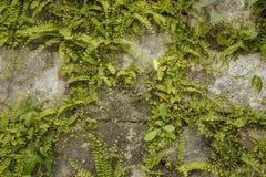 Ściana szarość kamienie z obfitą zieloną roślinnością projekta wysoki ilustraci krajobrazu planu fabuły postanowienie obrazy stock