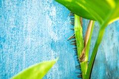 Ściana wyszczególnia natury rośliny Obraz Royalty Free