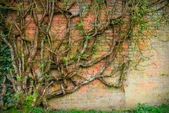 Ściana z cegieł. Obrazy Stock