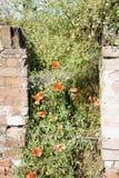 Ściana z cegieł z czerwonymi napami Fotografia Stock