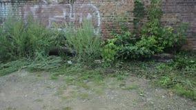 Ściana z cegieł dla tropić zdjęcie wideo