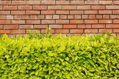 Ściana z cegieł i bramble Zdjęcie Royalty Free