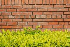 Ściana z cegieł i bramble Fotografia Royalty Free