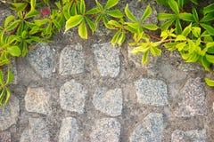 Ściana z cegieł lub ogrodzenie z dzikimi winogronami Filtr Fotografia Stock