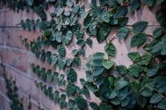 Ściana z cegieł z niektóre rozgałęzia się na nim zdjęcia stock