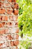 Ściana z cegieł z połówka zamazującymi liśćmi obraz stock