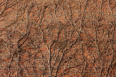 Ściana z cegieł przerastający rozgałęzia się brąz fotografia stock