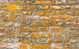 Ściana z cegieł robić cegły w pokoju obraz royalty free