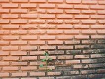 Ściana Z Cegieł stary Fotografia Royalty Free