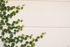 Ściana z cegieł tła tekstura Obraz Royalty Free