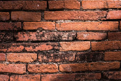 Ściana z cegieł tła tekstura Obrazy Royalty Free
