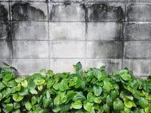 Ściana z cegieł tło z naturalnym krzakiem Zdjęcie Stock