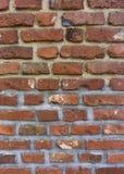 Ściana z cegieł tekstury architektury kamieniarka Zdjęcia Stock