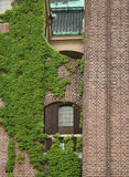Ściana z cegieł z Europejskim bluszczem Fotografia Stock