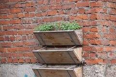 Ściana z cegieł z kwiatów pudełkami Obrazy Royalty Free