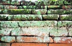 Ściana Z Cegieł z mech zdjęcie stock