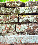 Ściana Z Cegieł z mech obraz royalty free