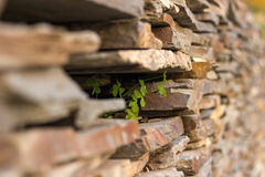 Ściana z cegieł z roślinami inside Obraz Stock