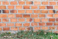 Ściana z cegieł z trawą na podłoga obrazy royalty free