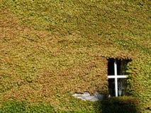 Ściana zakrywająca z densed bluszczem opuszcza, Dinan, cotes, Britt Zdjęcie Royalty Free