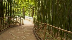 Ścieżek prowadzenia przez bambusowego gaju zbiory wideo