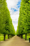 Ścieżka Zdjęcie Royalty Free
