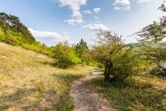 Ścieżka blisko łąka, poly, agricultue, drzewa i krzaki i, Lata niebieskie niebo i pogoda Zdjęcia Royalty Free