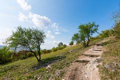 Ścieżka blisko łąka, poly, agricultue, drzewa i krzaki i, Lata niebieskie niebo i pogoda Zdjęcia Stock