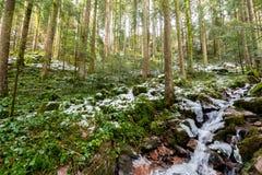 ścieżka Burgbach siklawa marznąca w wintertime w Niemcy, Złym obrazy royalty free