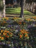 Ścieżka chętka park w Madrid zdjęcie stock