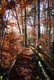 Ścieżka czerwieni i pomarańcze liście Zdjęcia Stock
