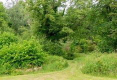 Ścieżka dżungla Szkoccy drzewa i krzaki Obraz Stock