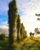 Ścieżka drzewa fotografia stock