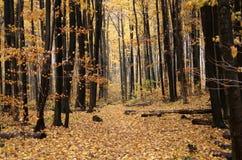 ścieżka jesienią Zdjęcie Stock