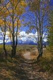 ścieżka jesienią Zdjęcia Stock