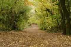 ścieżka jesienią Zdjęcia Royalty Free