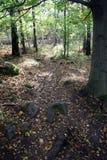 ścieżka jesienią Obrazy Royalty Free