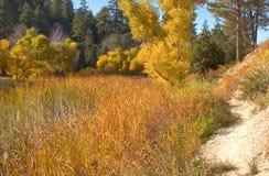 ścieżka jest krawędzi lake Obraz Royalty Free