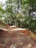 Ścieżka las w au fotografia stock