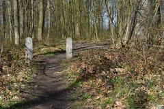 Ścieżka lasowego śladu drzewa drewniany krajobraz Obrazy Royalty Free