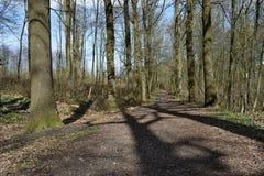 Ścieżka lasowego śladu drzewa drewniany krajobraz Fotografia Stock