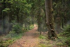 Ścieżka lasowy, Drzewny bagażnik z pieczarkami, fotografia stock