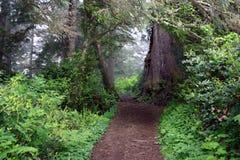 ścieżka leśna Fotografia Stock