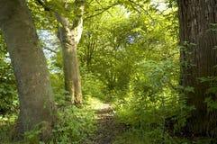 ścieżka leśna Obraz Stock