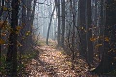 ścieżka leśna zdjęcie royalty free