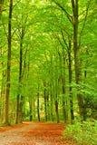 ścieżka leśna Zdjęcie Stock