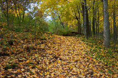 ścieżka lesista Obraz Royalty Free