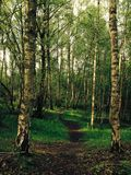 ścieżka lesista fotografia stock