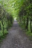ścieżka lesista Obraz Stock